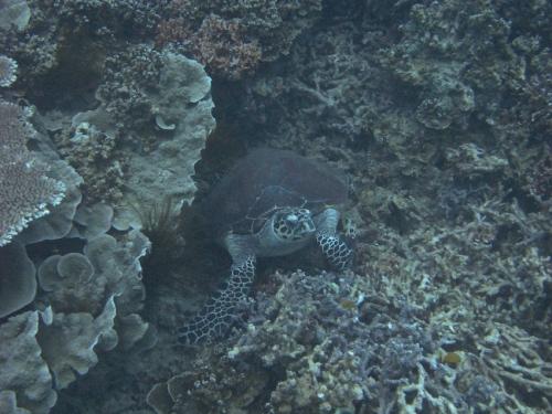 img_0840-turtle