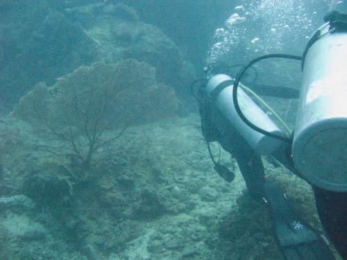 img_0857-sea-fan-coral
