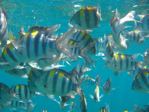 img_0906-fishes