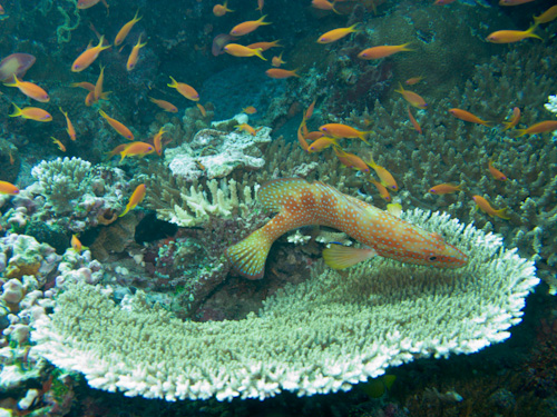 IMG_1846 - Coral and Fish